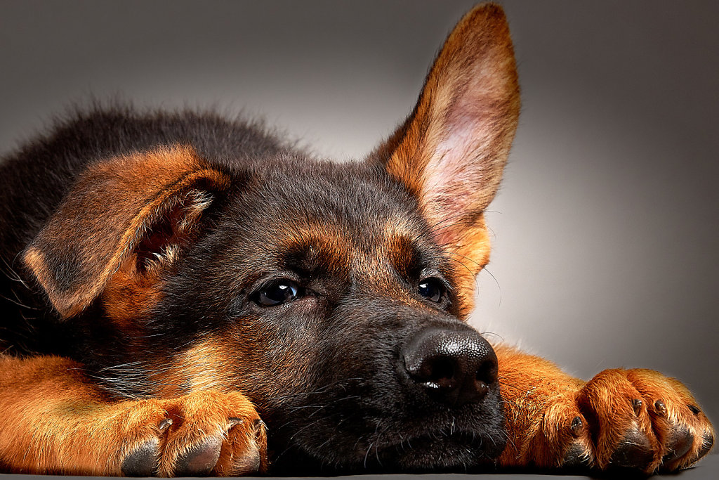 Guenther-Zipfelmayer-Dogs-more-023.jpg